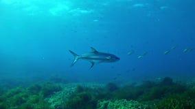Nurkujący Maldives - leerfish zbiory