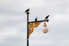 Nurkujący na Ulicznym lamppost Fotografia Royalty Free