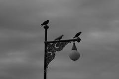 Nurkujący na Ulicznym lamppost Obrazy Royalty Free