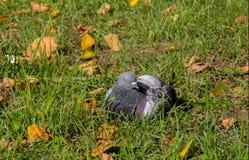 Nurkujący w trawie Zdjęcia Royalty Free