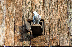 Nurkujący w zoo Obrazy Royalty Free