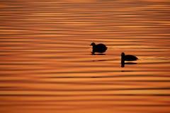 nurkuje jezioro Obraz Royalty Free