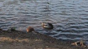 nurkuje jezioro zbiory wideo