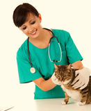 Nurse or doctor vet holding a cat Stock Photos
