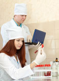 Nurse and  doctor works in clinic lab Royalty Free Stock Image