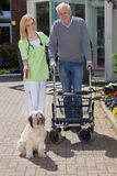 Nurse Helping Man with Walker Take Dog for Walk. Smiling Blond Nurse Holding onto Arm of Senior Man, Helping Man with Walker Walk Dog on Leash Outdoors in front Stock Images
