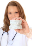 Nurse holding plaster cast of teeth Stock Image