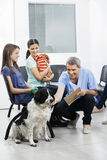 Nurse Playing With Dog While Pet Owners Looking At Him. Happy male nurse playing with Border Collie while pet owners looking at him in clinic Royalty Free Stock Photos