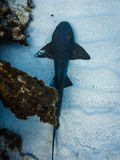 Nurse shark on white sands near coral reef Royalty Free Stock Photos