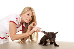 Nurse with small dog shot with big needle Royalty Free Stock Image