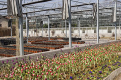 Nursery. Large nursery for cultivating flowers Stock Image