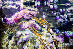 Nursery coral reef scene rope colorful royalty free stock photo