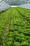 Nursery for the cultivation of vegetables Royalty Free Stock Images