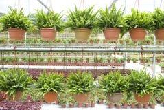 Nursery farm Stock Photography