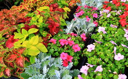 Nursery Flower Sales Royalty Free Stock Photography
