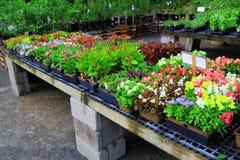 Nursery Flowers Stock Images