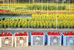 Nursery garden Stock Photos