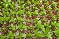 Nursery garden. A photo of nursery garden royalty free stock photos