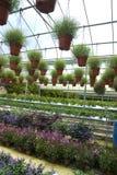 Nursery garden. A photo of nursery garden royalty free stock images