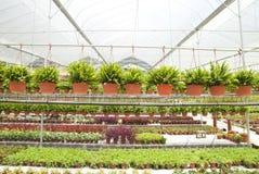 Nursery garden Royalty Free Stock Image