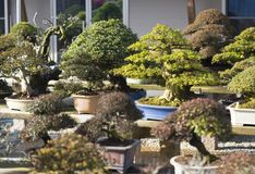 Nursery garden bonsai in japan stock photo