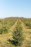 Nursery garden Christmas trees Stock Photography