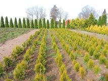 Nursery garden, Lithuania Stock Photography