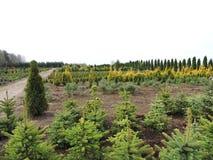 Nursery garden, Lithuania Stock Photo