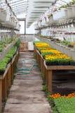 Nursery Greenhouse Interior Stock Images