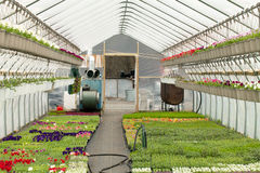 Nursery Greenhouse Interior Royalty Free Stock Images