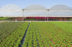 Nursery with greenhouses. Stock Photo