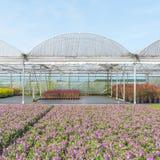 Nursery with greenhouses. Royalty Free Stock Photos