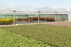 Nursery with greenhouses. Stock Photo