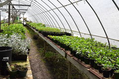 Nursery growing with a hoop tunnel. In early Spring Stock Image