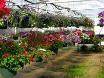 Nursery - Hanging Flower Plants Stock Photo