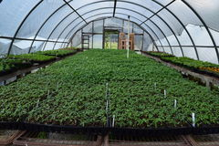 Nursery Hoop Tunnel. Hoop house tunnel for a nursery with seedlings stock photography