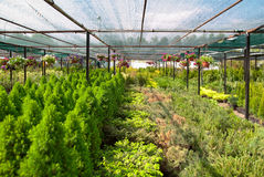 The nursery of plant Royalty Free Stock Images