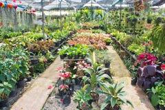 Free Nursery Plant And Tree Royalty Free Stock Photo - 29195745