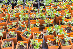 Nursery plant in orange pot in home's garden Royalty Free Stock Photo
