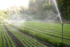 Nursery plantation being watered Royalty Free Stock Image