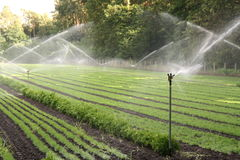 Nursery plantation being watered Stock Photography