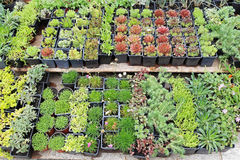 Nursery plants Stock Photo