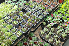 Nursery plants Stock Photos