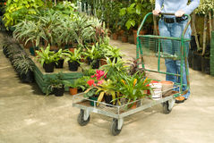 Nursery Plants For Sale Stock Photo