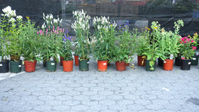 Nursery Plants Stock Photo