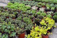 Nursery plants shop. Nursery garden of decorative plants and seedlings royalty free stock photo