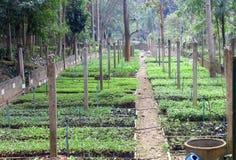 Nursery seedling Royalty Free Stock Photo
