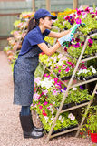 Nursery worker flowers Royalty Free Stock Photos