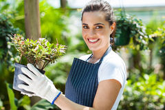 Nursery worker greenhouse Royalty Free Stock Photography