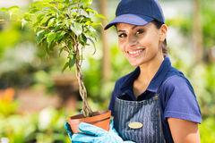 Nursery worker potted plant Stock Photos